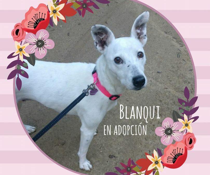 Blanqui Pelanqui