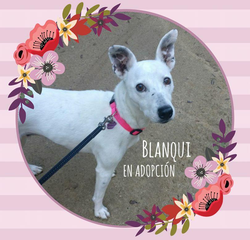 Blanqui 03